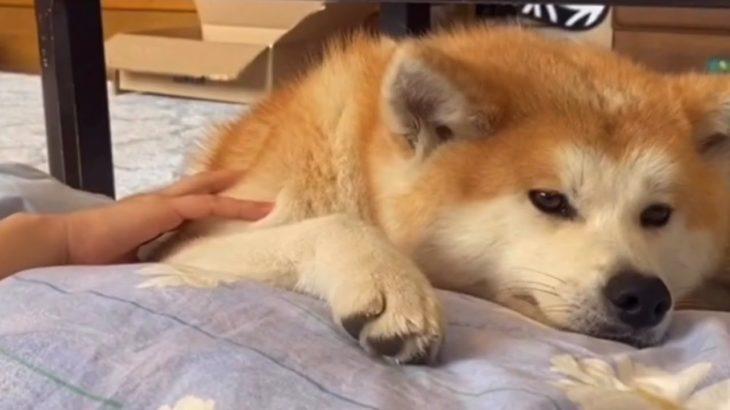 彼女の仕事は添い寝とヘアケア【Akita-inu】Her job is sleeping together and hair care
