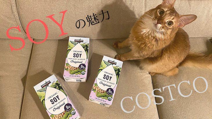 【健康・ダイエット】【コストコ】豆乳って飲んでますか?魅力をお伝えします!ベンガル🐈ペルシャ🐈ソマリ 〜Are you drinking soybean milk?〜
